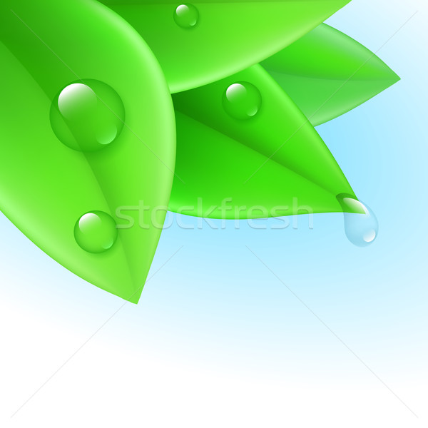 Zuiverheid zuiver transparant waterdruppels groene bladeren water Stockfoto © dvarg
