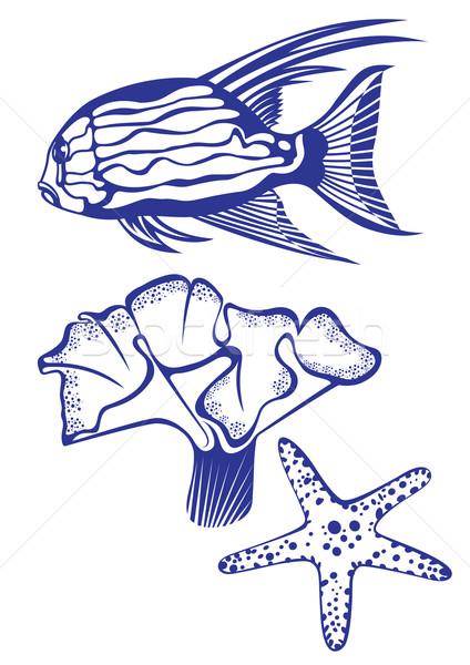 Poissons tropicaux corail starfish blanche design herbe Photo stock © dvarg