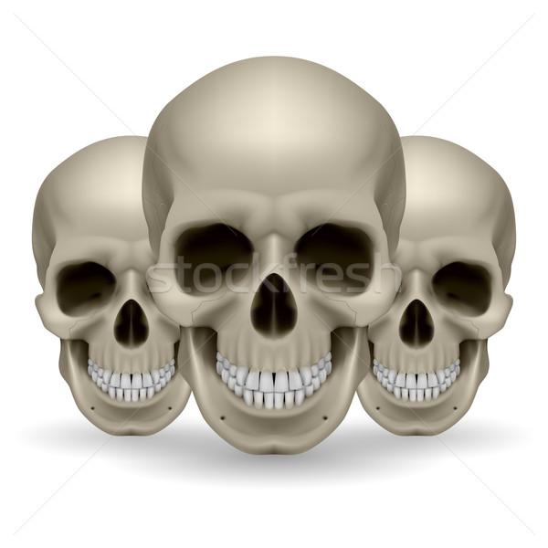 Trois crânes illustration blanche fond groupe Photo stock © dvarg