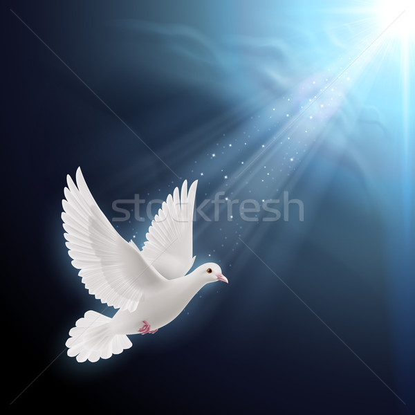 White dove in sunlight Stock photo © dvarg