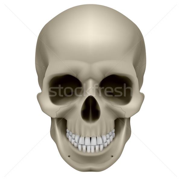 Human skull Stock photo © dvarg