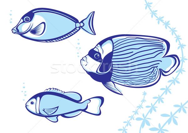 тропические рыбы белый дизайна трава рыбы красоту Сток-фото © dvarg