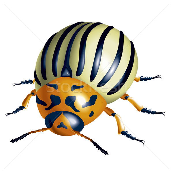 Colorado potato beetle Stock photo © dvarg