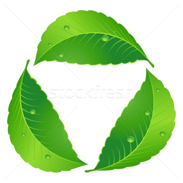 Symbool recycleren blad illustratie witte voorjaar Stockfoto © dvarg