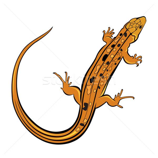Realistyczny gekon jaszczurka ilustracja biały projektu Zdjęcia stock © dvarg