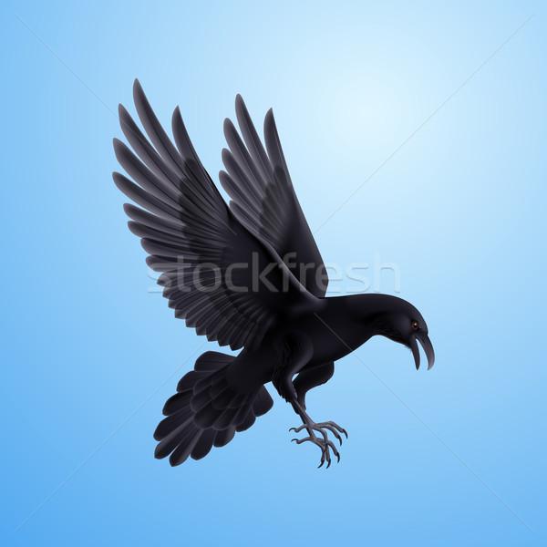 Zwarte raaf Blauw agressief illustratie blauwe hemel Stockfoto © dvarg