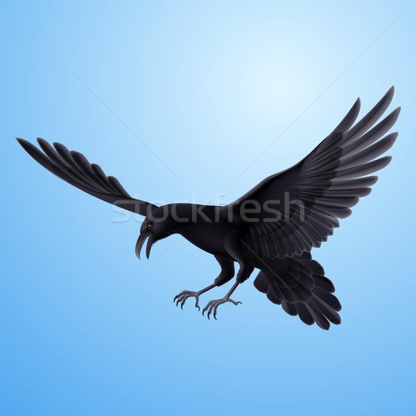Zwarte raaf Blauw agressief vliegen blauwe hemel Stockfoto © dvarg
