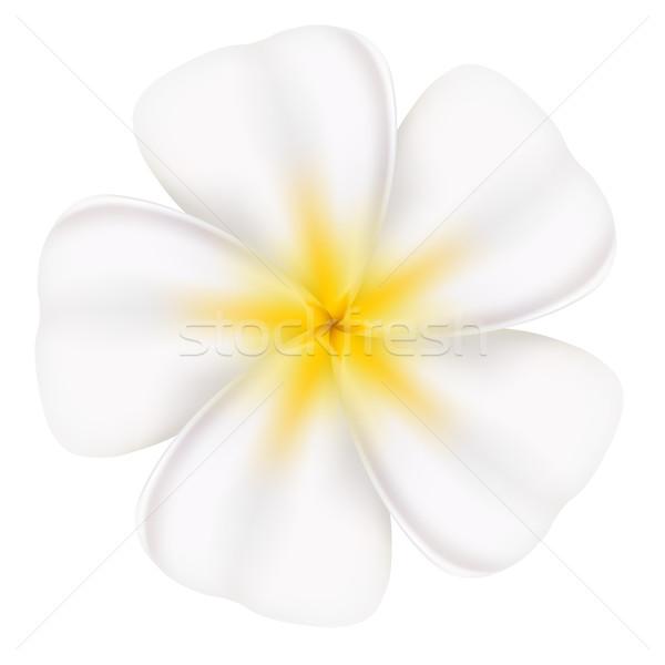 Beautiful frangipani Stock photo © dvarg