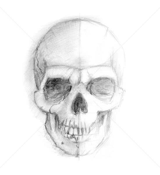 Drawing human skull Stock photo © dvarg