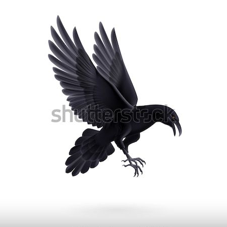 черный Raven белый иллюстрация Flying изолированный Сток-фото © dvarg