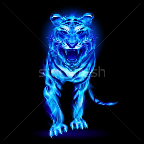 Blue fire tiger. Stock photo © dvarg