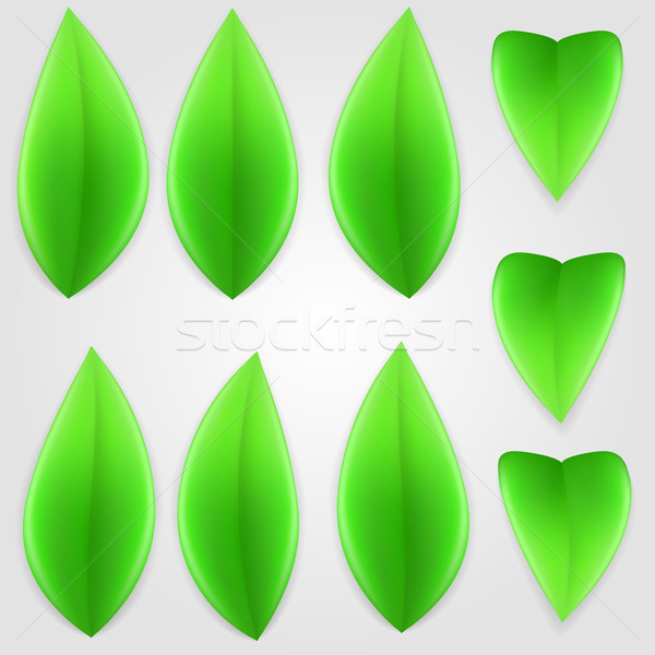 Natural green leaves. Stock photo © dvarg