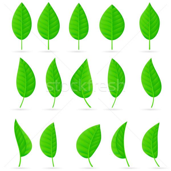 Feuilles vertes illustration blanche texture Photo stock © dvarg