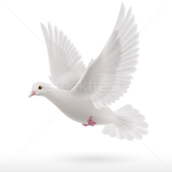 White dove Stock photo © dvarg