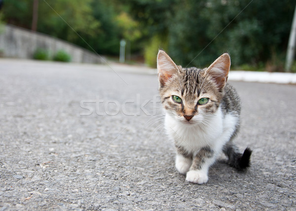 Little kitty Stock photo © dvarg