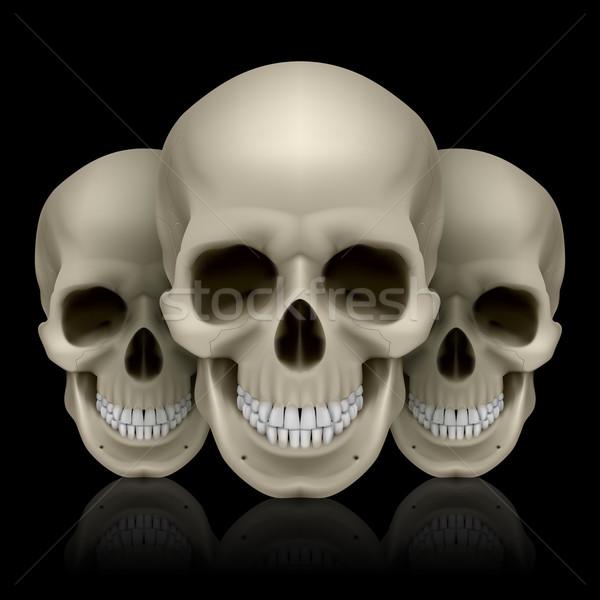Three skulls Stock photo © dvarg
