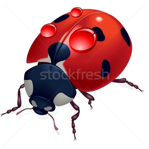 Uğur böceği çiy örnek tasarımcı beyaz doğa Stok fotoğraf © dvarg