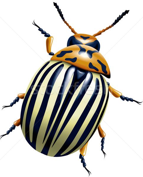 The Colorado potato beetle Stock photo © dvarg