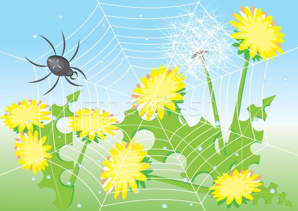 Cartoon spider and dandelions.  Stock photo © dvarg