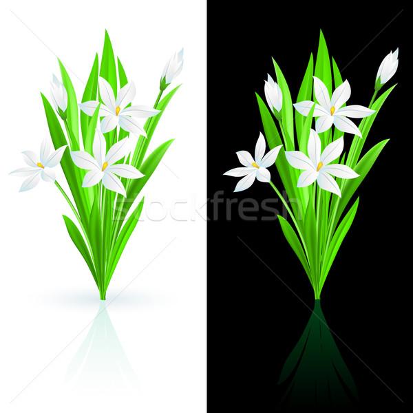 Spring flowers Stock photo © dvarg