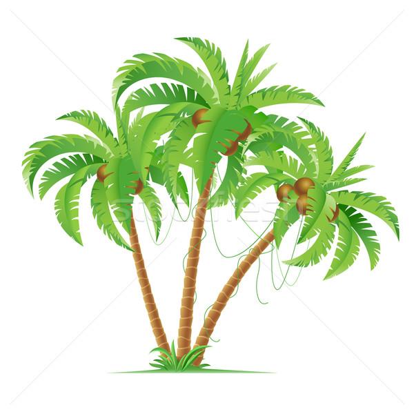 Drie kokosnoot palmen cartoon illustratie witte Stockfoto © dvarg
