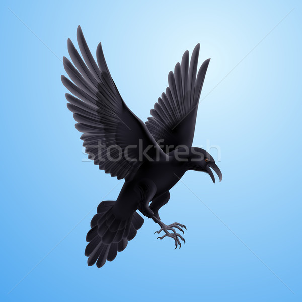 Black raven on blue background Stock photo © dvarg