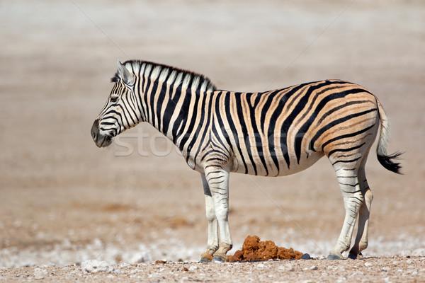 ストックフォト: 平野 · シマウマ · 公園 · ナミビア · 自然 · 動物