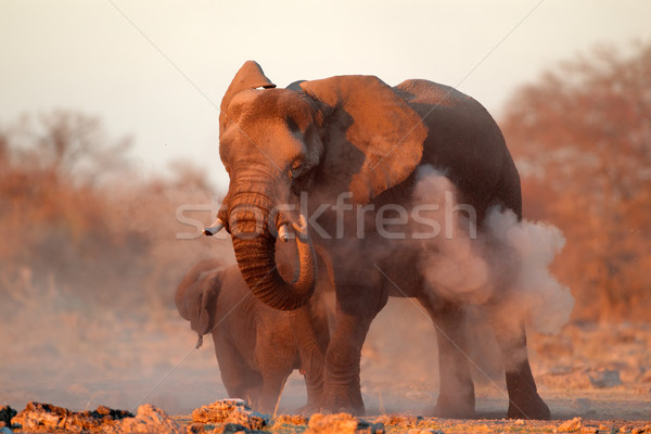 African elephant covered in dust Stock photo © EcoPic