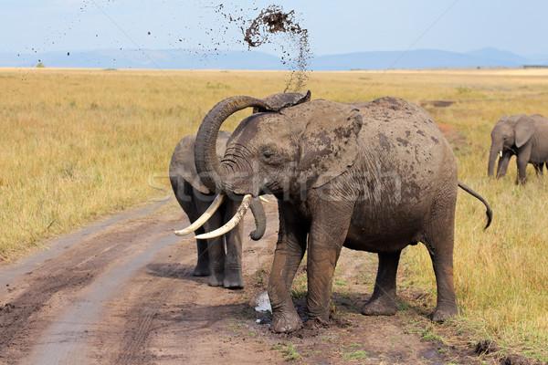 アフリカゾウ 泥 リザーブ ケニア ストックフォト © EcoPic