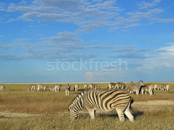 Zèbre troupeau zèbres parc Namibie Photo stock © EcoPic