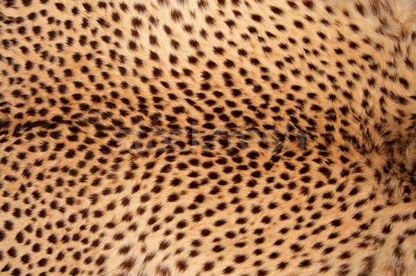 Stockfoto: Cheetah · huid · mode · kat