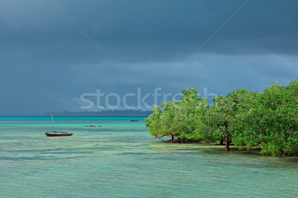 Seascape with mangrove trees Stock photo © EcoPic