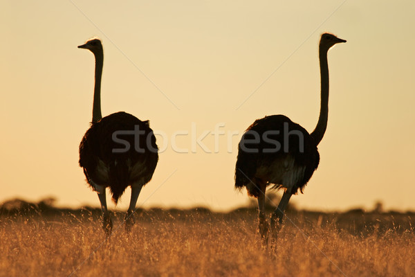 Foto d'archivio: Luce · deserto · Sudafrica · erba · natura