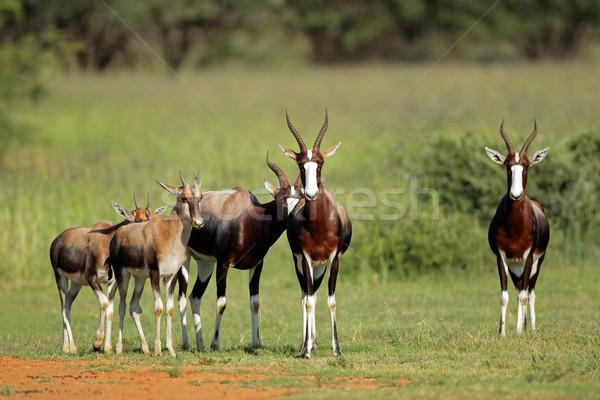 Familie groep South Africa gras afrikaanse safari Stockfoto © EcoPic