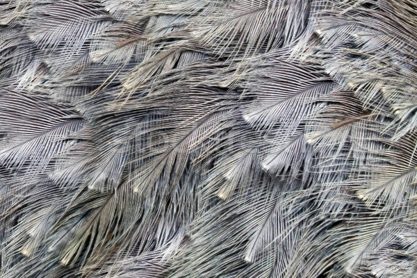 Ostrich feather background Stock photo © EcoPic