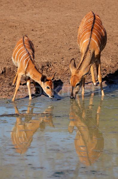 Pitnej dwa kobiet woda pitna gry rezerwa Zdjęcia stock © EcoPic