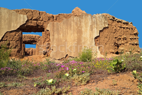 Ruins and wild flowers - South Africa Stock photo © EcoPic