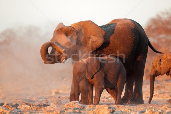 Stok fotoğraf: Afrika · filler · kapalı · toz · park · Namibya