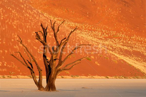 дерево дюна мертвых красный песчаная дюна Намибия Сток-фото © EcoPic