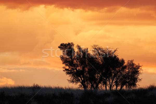 African sunset with silhouetted trees Stock photo © EcoPic