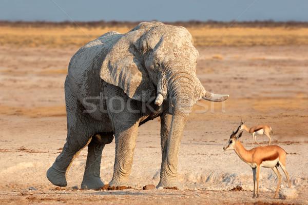 Elefante africano coperto fango toro parco Foto d'archivio © EcoPic