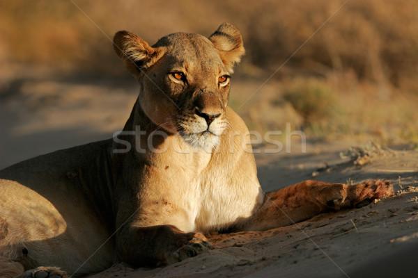 Stok fotoğraf: ışık · çöl · Güney · Afrika
