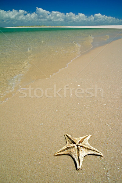Tropical beach Stock photo © EcoPic