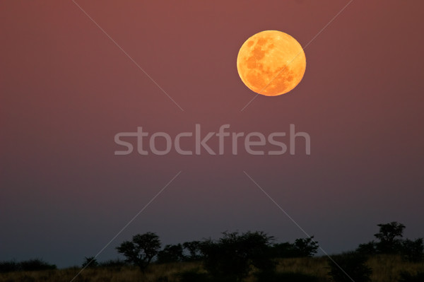 Moonlit landscape Stock photo © EcoPic