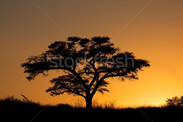 ストックフォト: 日没 · ツリー · アフリカ · 砂漠 · 南アフリカ · オレンジ