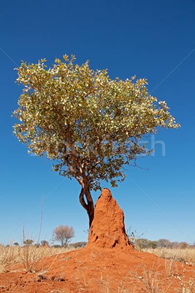 Tree and termite mound Stock photo © EcoPic