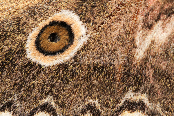 Wing of a moth Stock photo © EcoPic