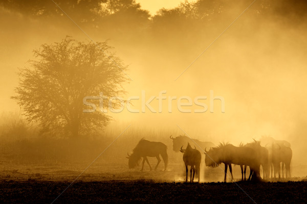 Stock foto: Blau · Staub · sunrise · Wüste · Südafrika · Natur