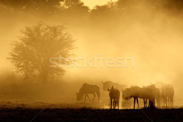 Stockfoto: Blauw · stof · zonsopgang · woestijn · South · Africa · natuur