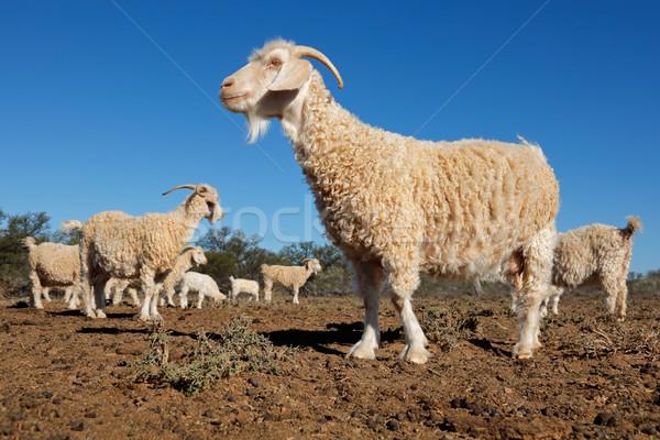 Rural fazenda africano céu azul Foto stock © EcoPic